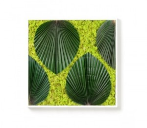 tableau vegetal amazone 2 300x262 Decorar con plantas