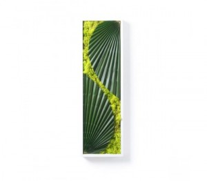 tableau vegetal amazone 3 300x262 Decorar con plantas